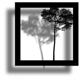 Sticker Cadre Ombre La Forêt